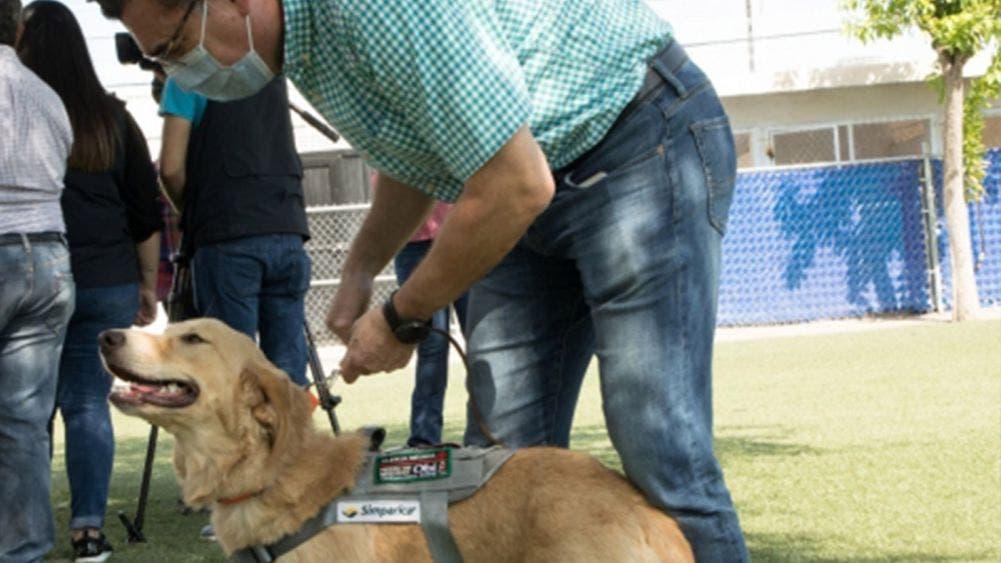 Entrenan en Hermosillo perros para detectar casos de coronavirus