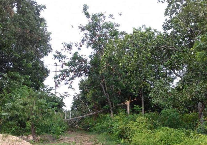 Usuarios de la CFE piden atender falta de luz en la ruta de Los Chunes.