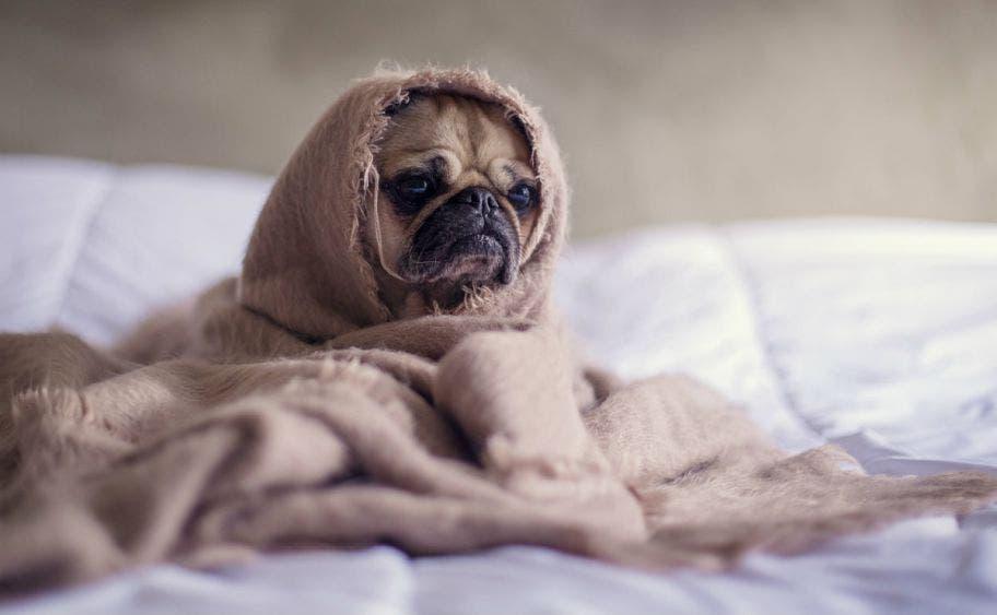 ¿Cómo calmar a tu mascota frente a un huracán?