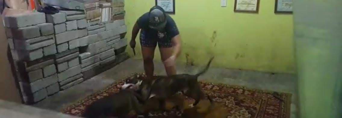Utilizan predio como criadero de perros para peleas clandestinas