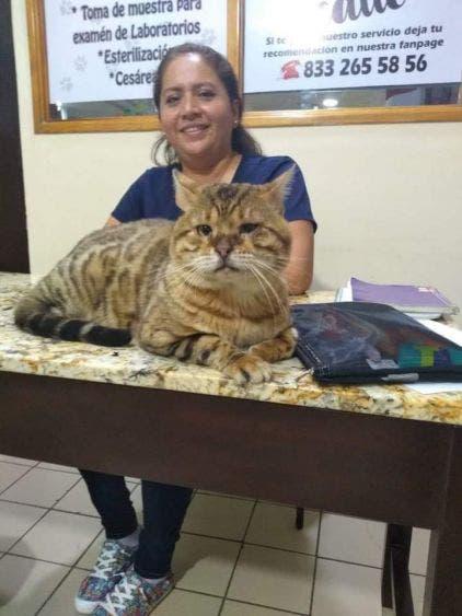Confunden enorme gato bengalí con un felino; el animal de casi un metro de largo y seis kilos de peso, fue rescatado en un parque de Tampico.