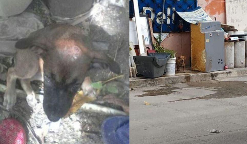 Ciudadanía se une para acabar con el maltrato y abandono animal