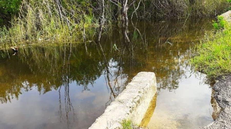 Sugieren a morelenses evitar zonas inundadas por aparición de cocodrilos
