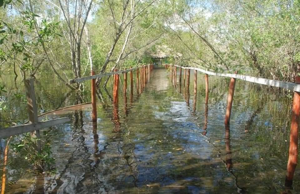 Incrementa nivel de agua en laguna Chichankanaab en JMM; las lluvias recientes provocaron escurrimientos en la Zona Maya.