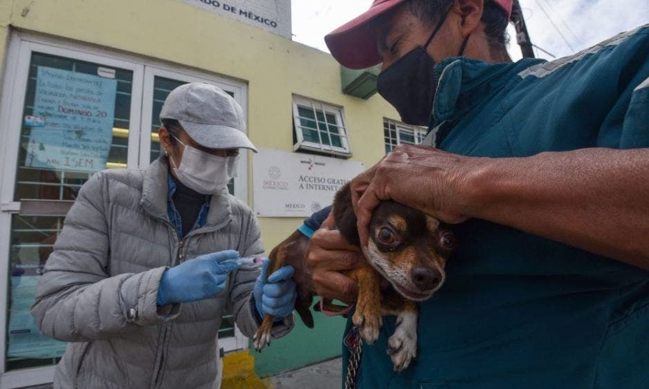 Anuncian nueva campaña de vacunación antirrábica para perros y gatos en Mérida