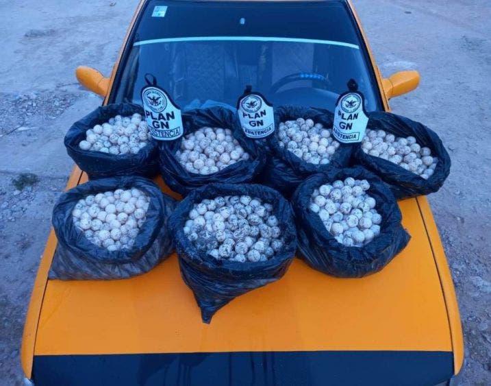 Guardia Nacional decomisa tres mil huevos de tortuga