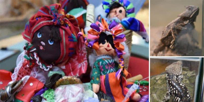 En muñecas de trapo trafican animales exóticos desde México.