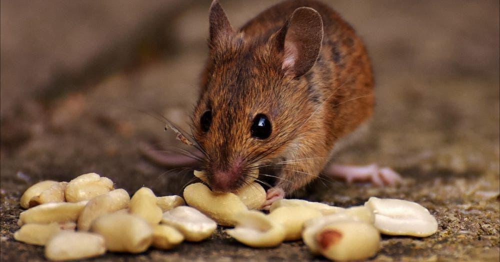 Niño muere tras comer bolillo con veneno para RATAS