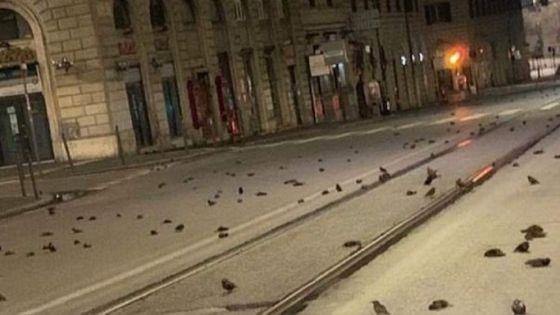 Fuegos artificiales matan a cientos de aves en Italia