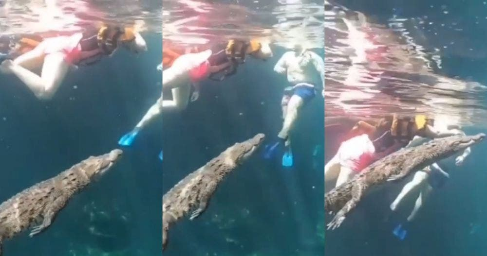 Nadar con cocodrilos ya es posible