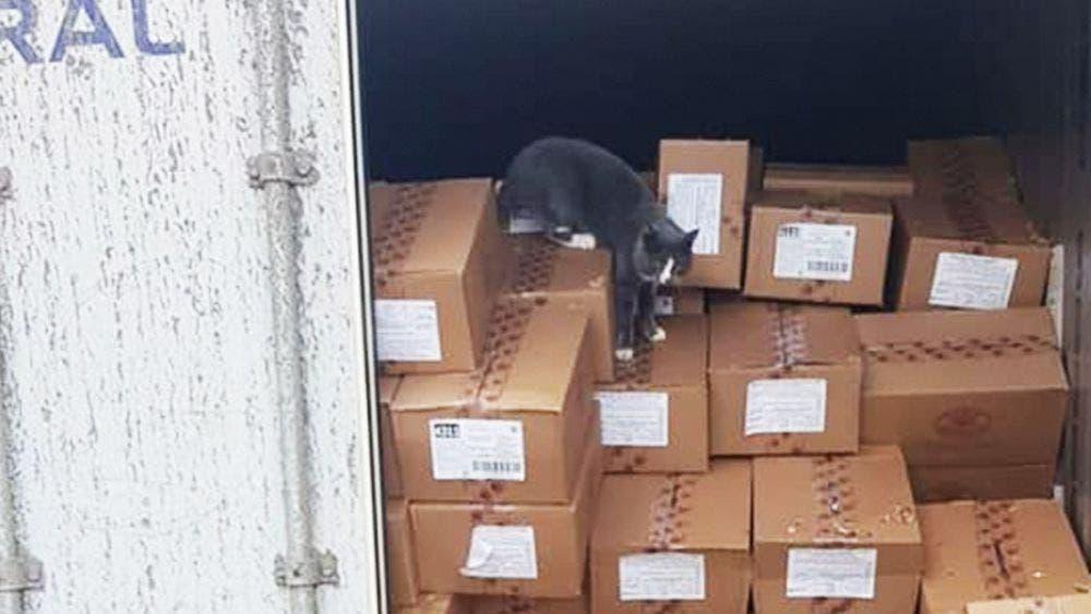 Gato sobrevive dentro de un contenedor en altamar comiendo bombones