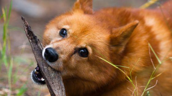 """Cachorra enloquece las redes sociales con """"diabólico"""" truco"""