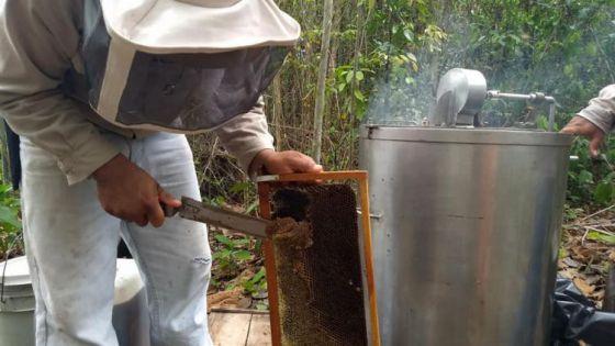 Producción miel, esperanza de campesinos en la Zona Maya.