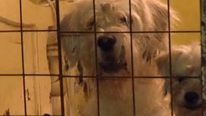 Siguen denuncias por robo de mascotas en Chetumal.