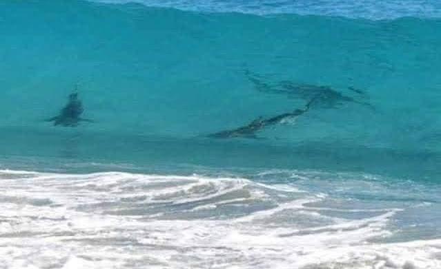 Alerta por presencia de tiburones en Xcalacoco en Playa del Carmen.