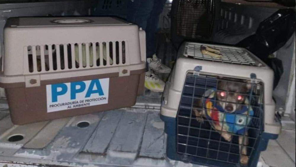 Crisis económica causa abandono de mascotas en la calle