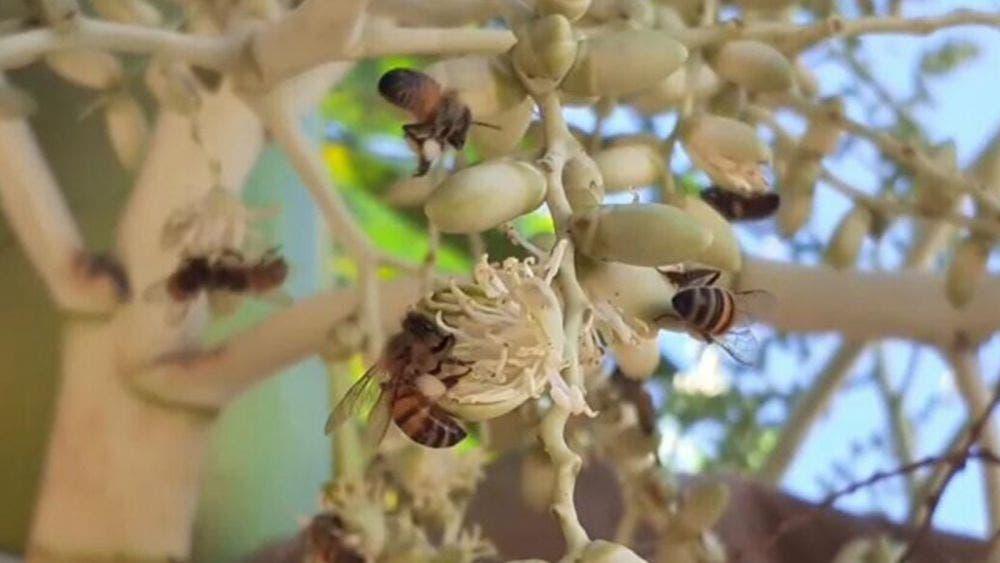 Falta de capacitación de apicultores merma a fauna apícola