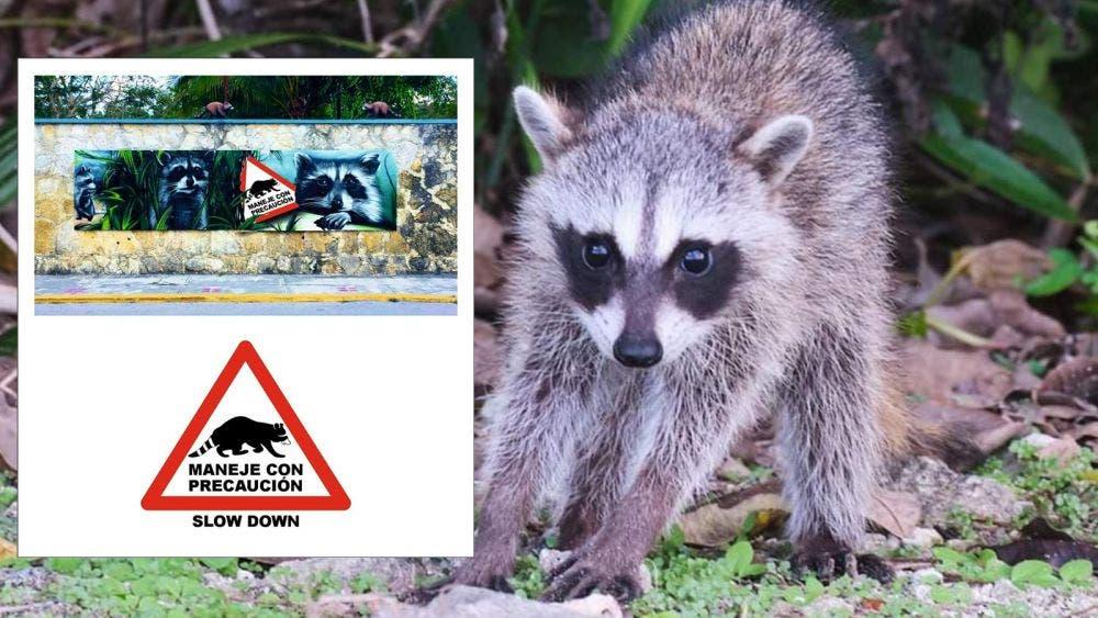 Lanzan campaña de protección a la fauna en Cozumel