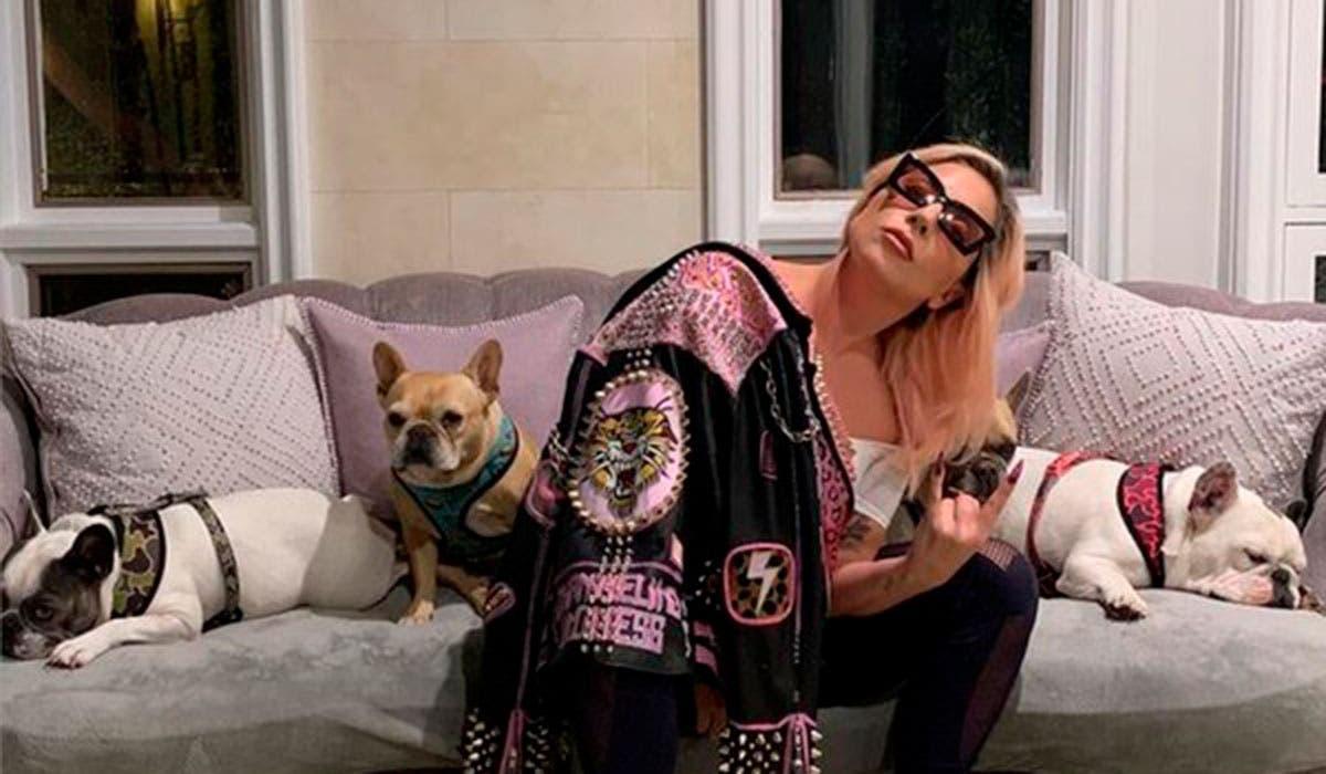 Entregan los perros de Lady Gaga a la policía de Los Ángeles