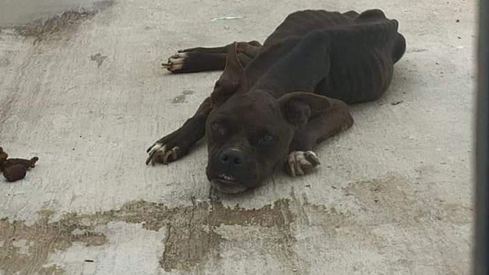 Aumentan denuncias por maltrato animal en Cozumel