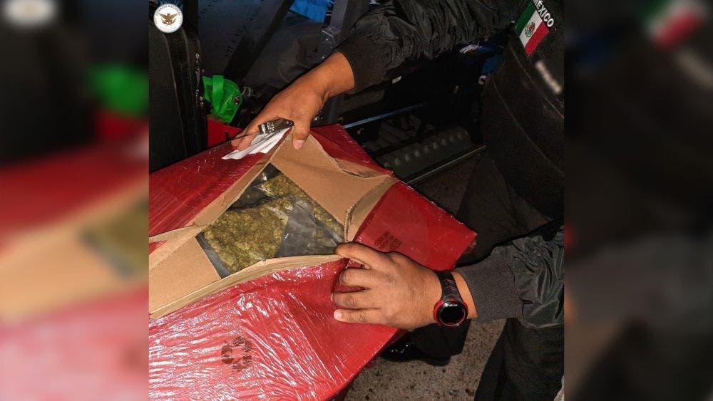 Asegura Guardia Nacional casi 50 kilos de mariguana en autobús