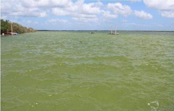Pedirán apoyo a la Marina para sanear la laguna de Bacalar.
