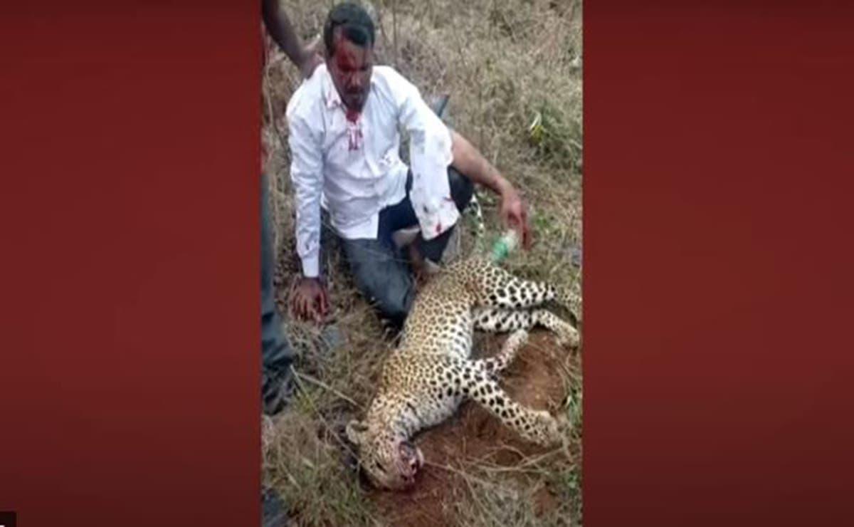 Para proteger a su familia, un hombre enfrentó a un leopardo a mano limpia, del impacto fue trasladado a un hospital