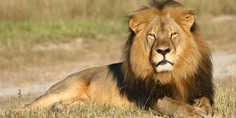 León ataca a trabajadora de zoológico