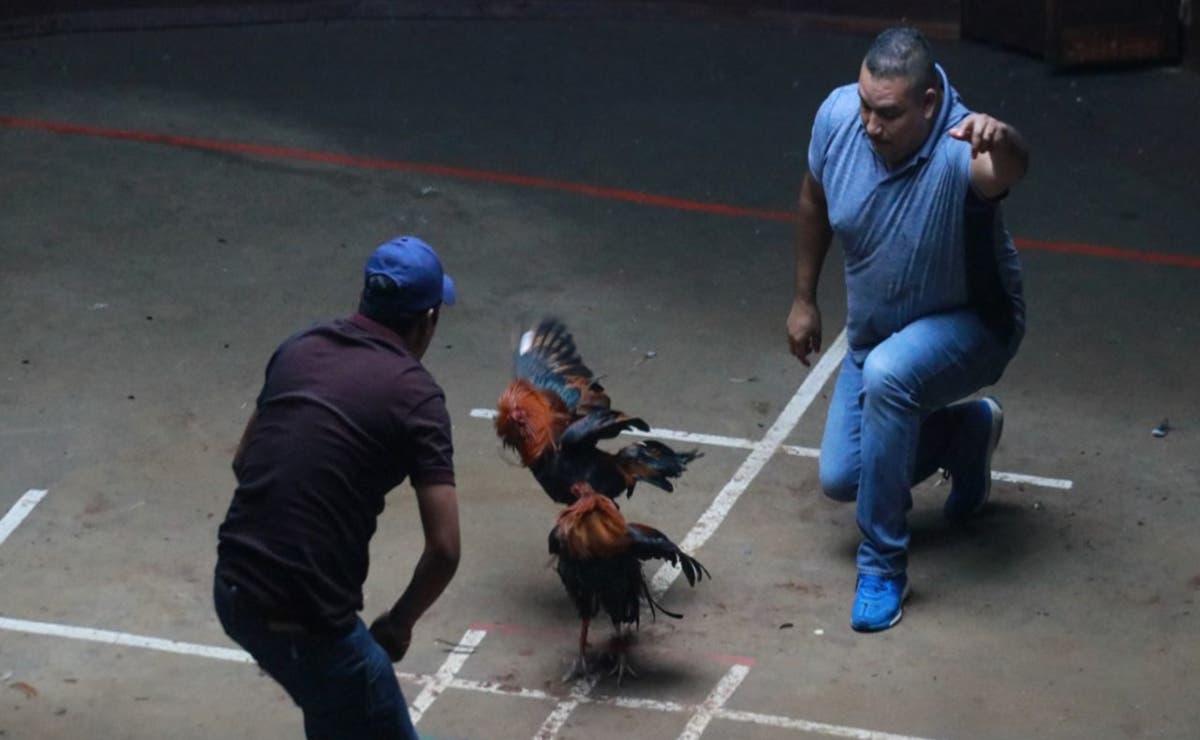 Un hombre murió a causa de las heridas que le ocasionó un gallo de pelea, cuando el animal intentaba escapar