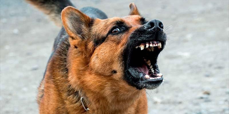 Abuelita muere tras ser atacada por sus perros