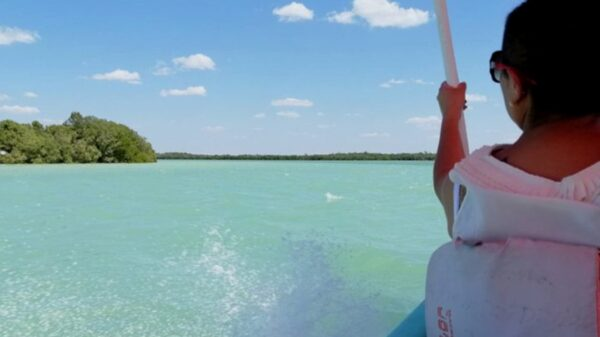 Playas de Celestún se preparan para ser visitadas por turistas en Semana Santa
