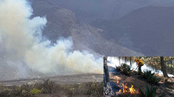Conafor reporta más de 50 incendios forestales en el país