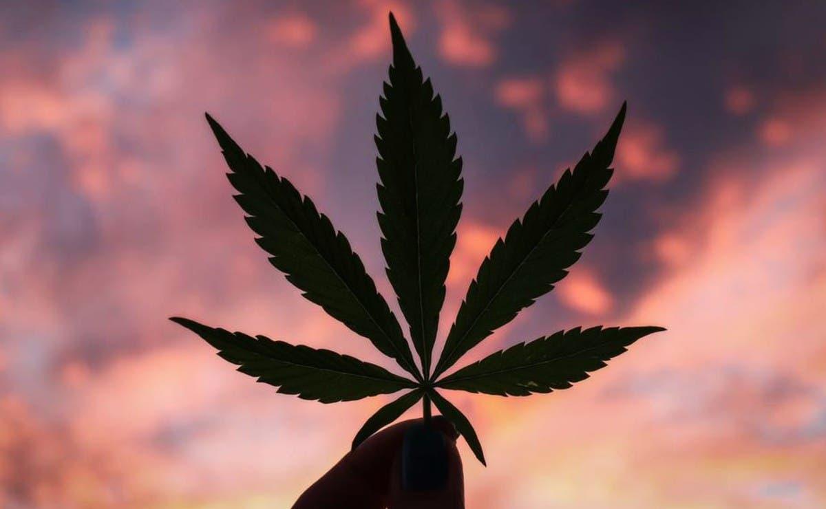'Uso lúdico de marihuana' esto es lo que significa dicho término'Uso lúdico de marihuana' esto es lo que significa dicho término