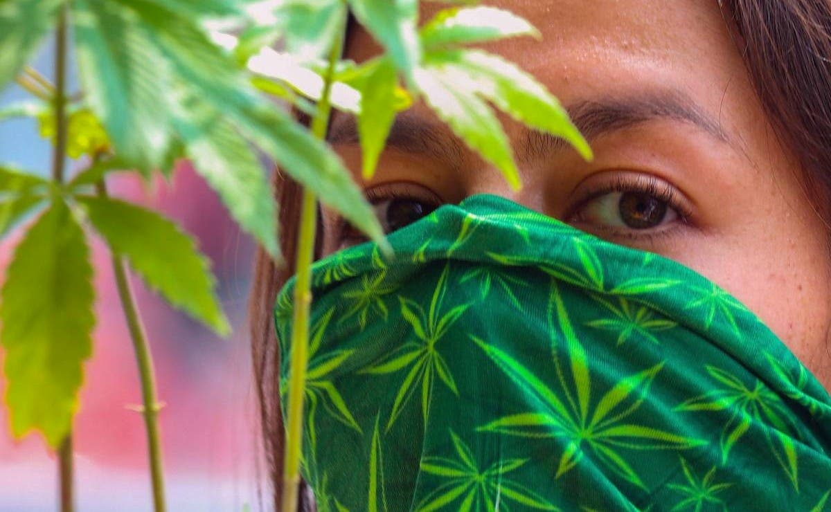 Ante aprobación de uso lúdico de cannabis, se prevé incremento de consumo en Yucatán