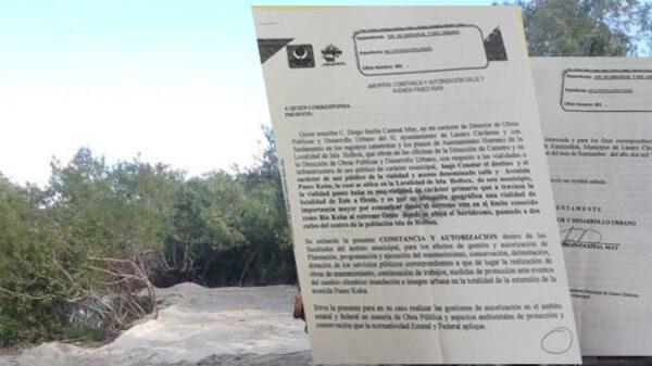 Exhiben permiso del Ayuntamiento para tala de mangle en Isla Grande de Holbox.