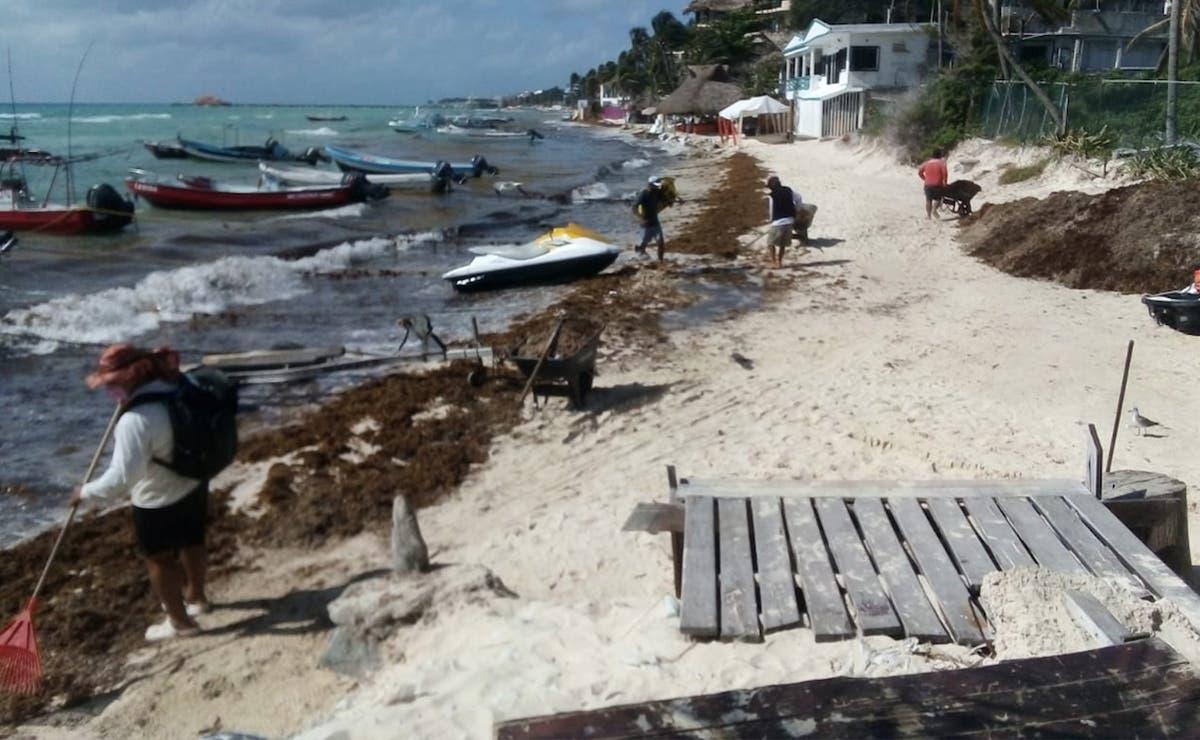 Ensombrece sargazo belleza de playas solidarenses