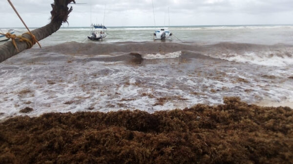 Sargazo arruina imagen turística de Playa Del Carmen