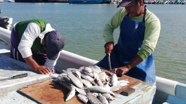 Pescadores no se dan abasto para cubrir la demanda en Chiquilá y Holbox.