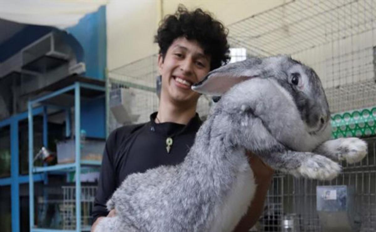 Como parte de un proyecto genético un estudiante universitario mexicano cría conejos gigantes de Flandes, conocidos como los más grande del mundo