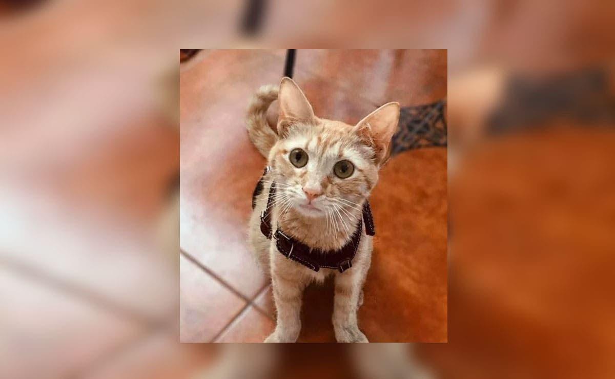 A través de Facebook, una mujer radicada en el municipio de Agua Dulce, Veracruz, denunció que su gatita fue violada
