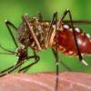 Declara Perú alerta epidemiológica por brote de dengue
