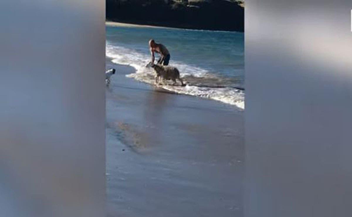Sin saber cómo salir una oveja quedó atrapada entre las olas del mar, por lo que vivió un momento angustiante.