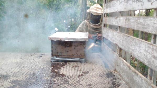Escape de abejas en zona maya moviliza a elementos de protección civil