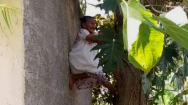 Tizimín: Abuelita se hace viral al subir a un árbol y bajar fruto