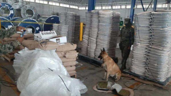 Decomisan una tonelada de marihuana en Colima