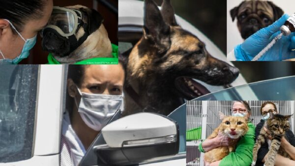Crea Rusia vacuna contra Covid-19 para mascotas