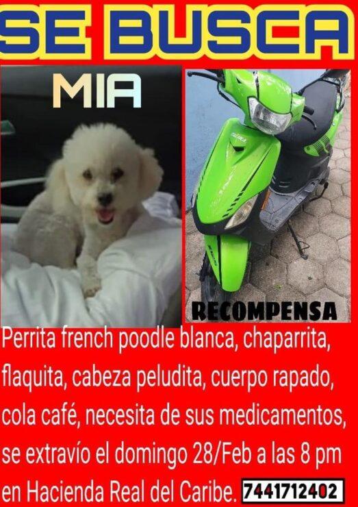 Pareja de Cancún ofrece su moto como recompensa por su..