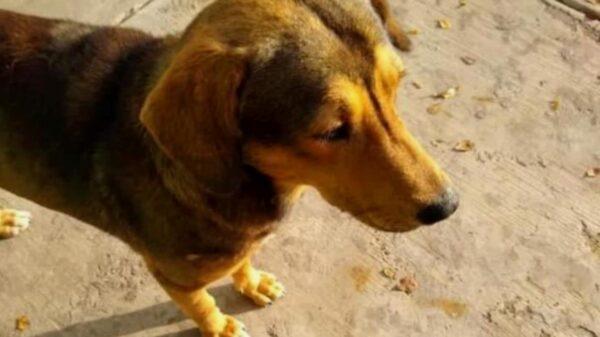 Piden justicia para Rodolfo, perrito asesinado a machetazos en Los Mochis, Sinaloa