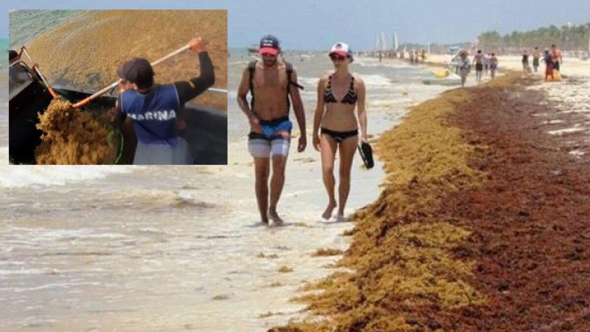 Luchan hoteleros de Playa Del Carmen contra el sargazo