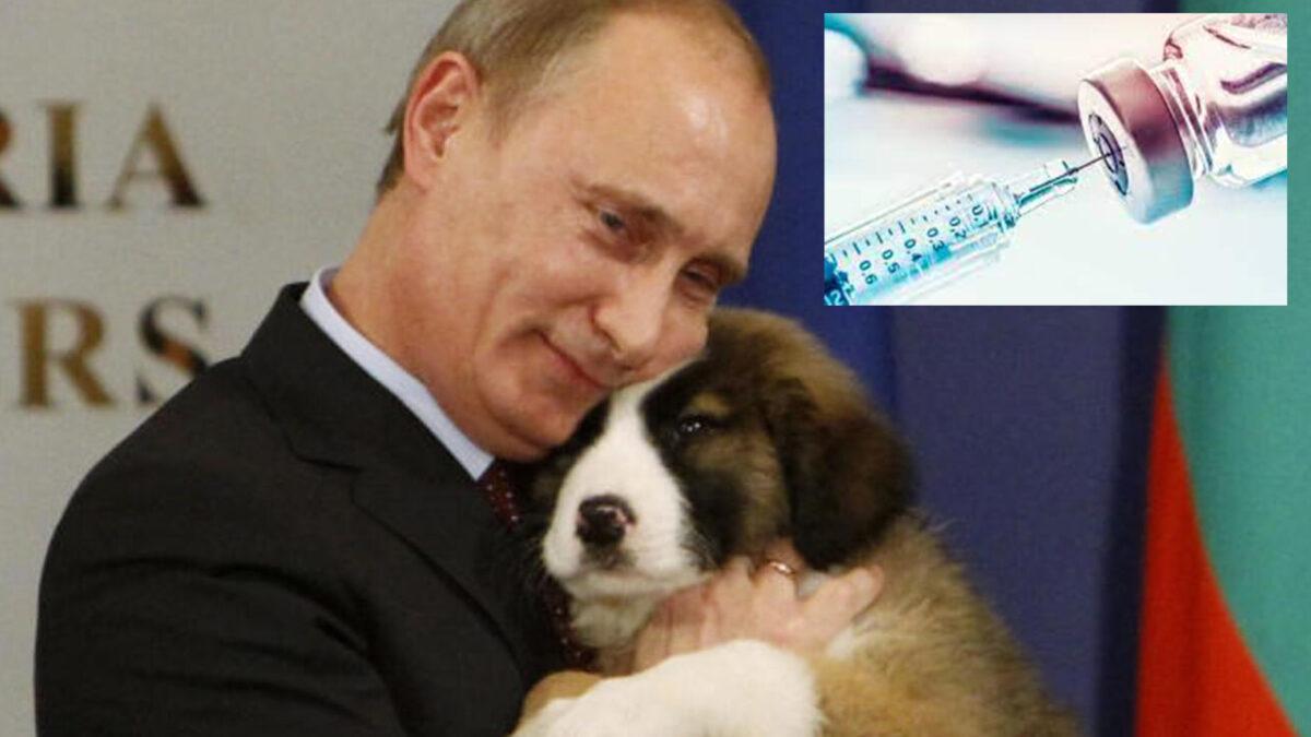 Rusia lo hace de nuevo, patenta primer vacuna covid para animales